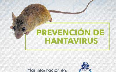 Prevención frente al hantavirus